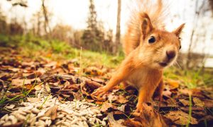 Squirrels Pose Cyber Threat
